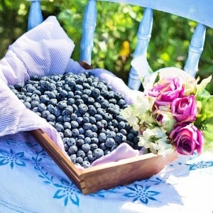 A rectangular brown box full of blueberries sitting on a blue chair next to pink flowers